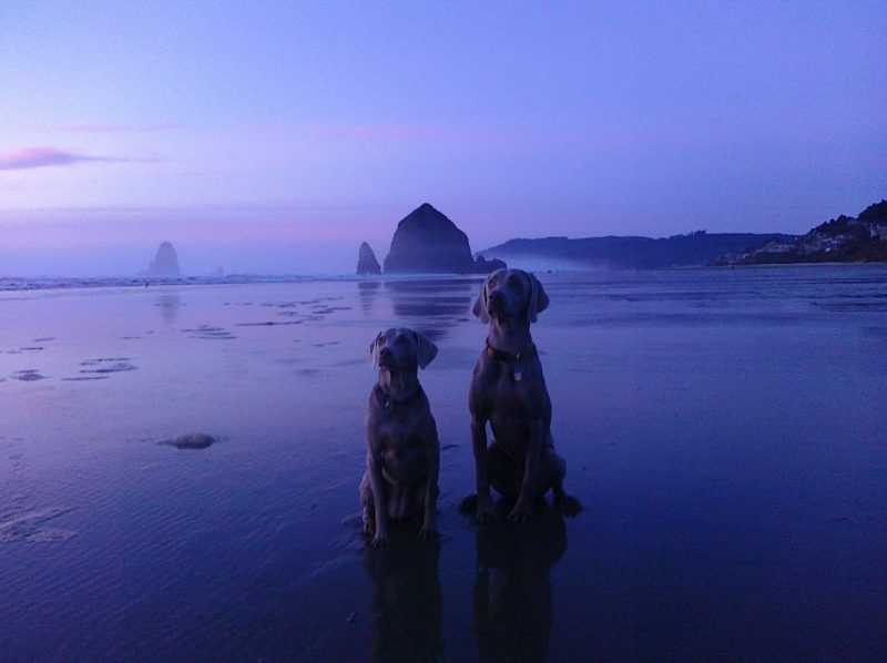 Our names are: Gunner and Baylee - On vacation with: Brandi