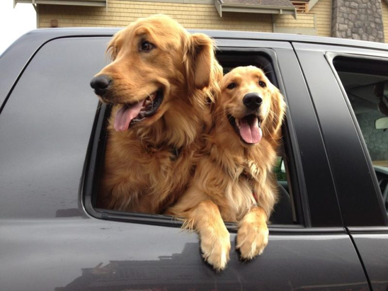 Our names are: Tucker and Sadie - On vacation with: Kelly