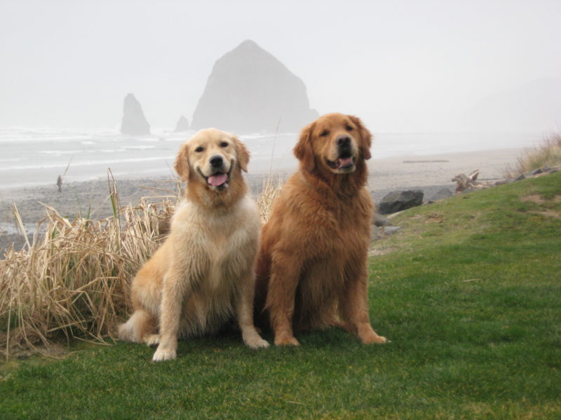 Our names are: Cooper & Catie - On vacation with: Bill
