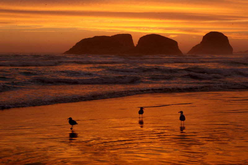 Birds at sunset on the shoreline