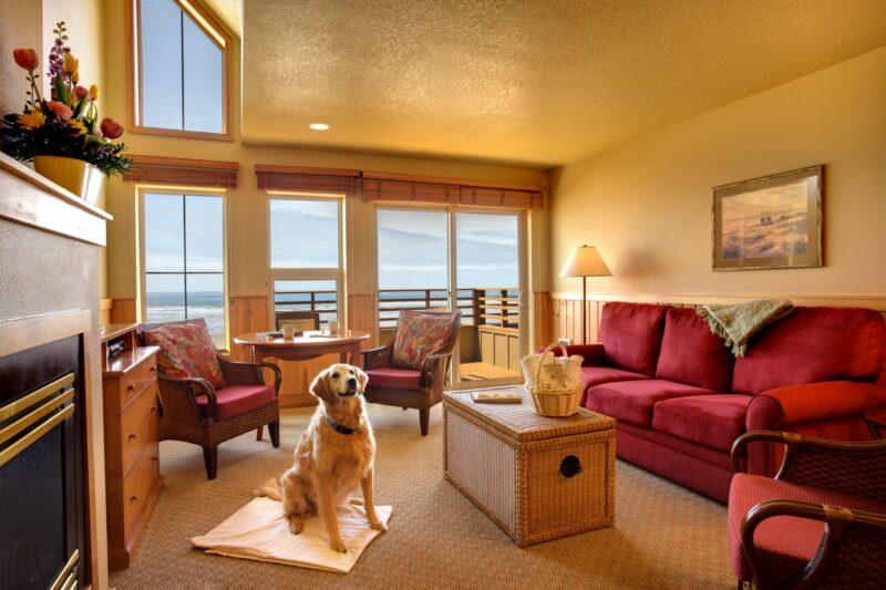 Queen suite with an ocean view